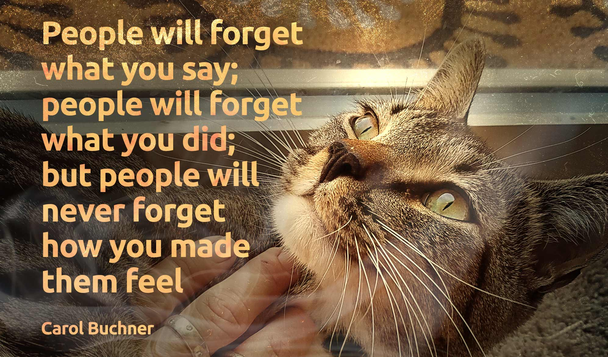 daily inspirational quote image: close up of a beautiful cat being scratched under the chin