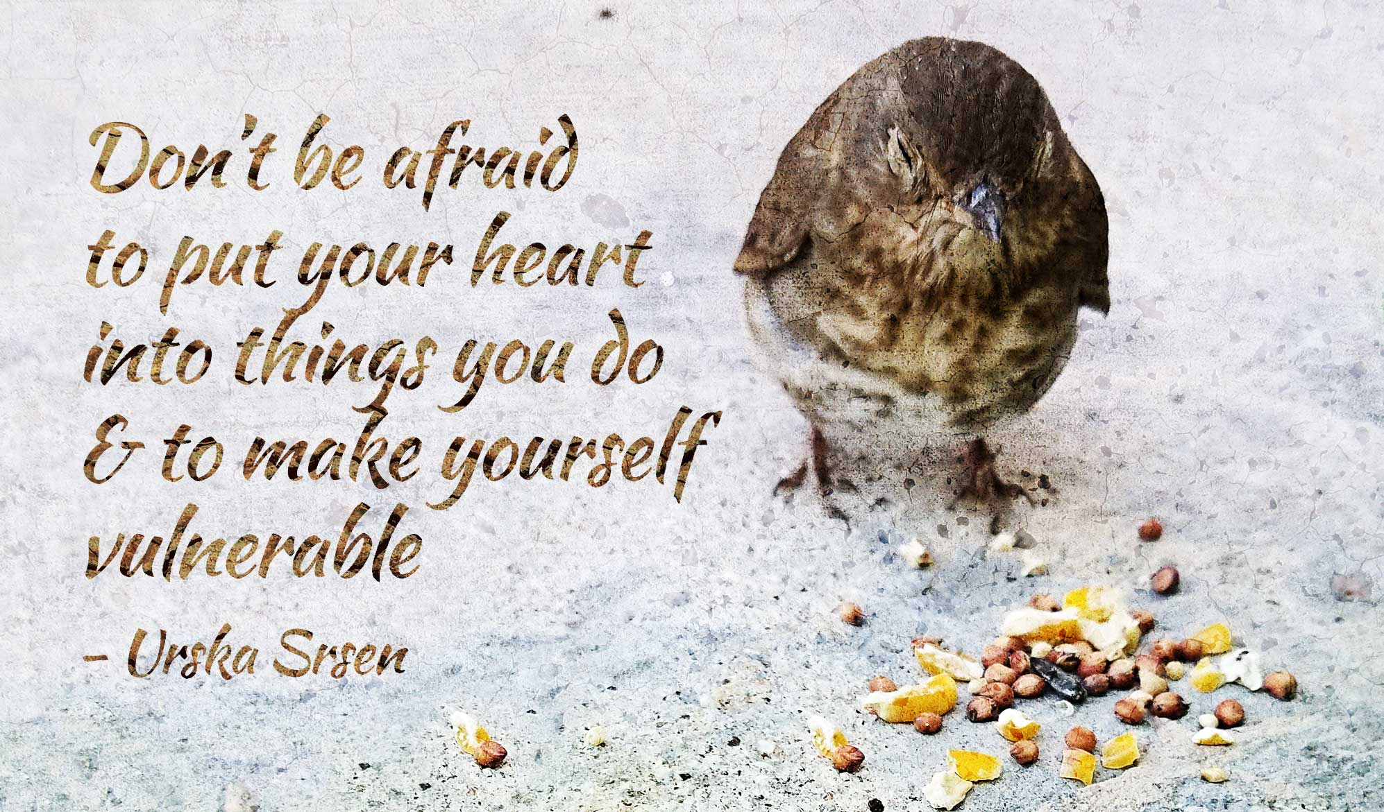 daily inspirational quote image: a hurt bird eating seeds