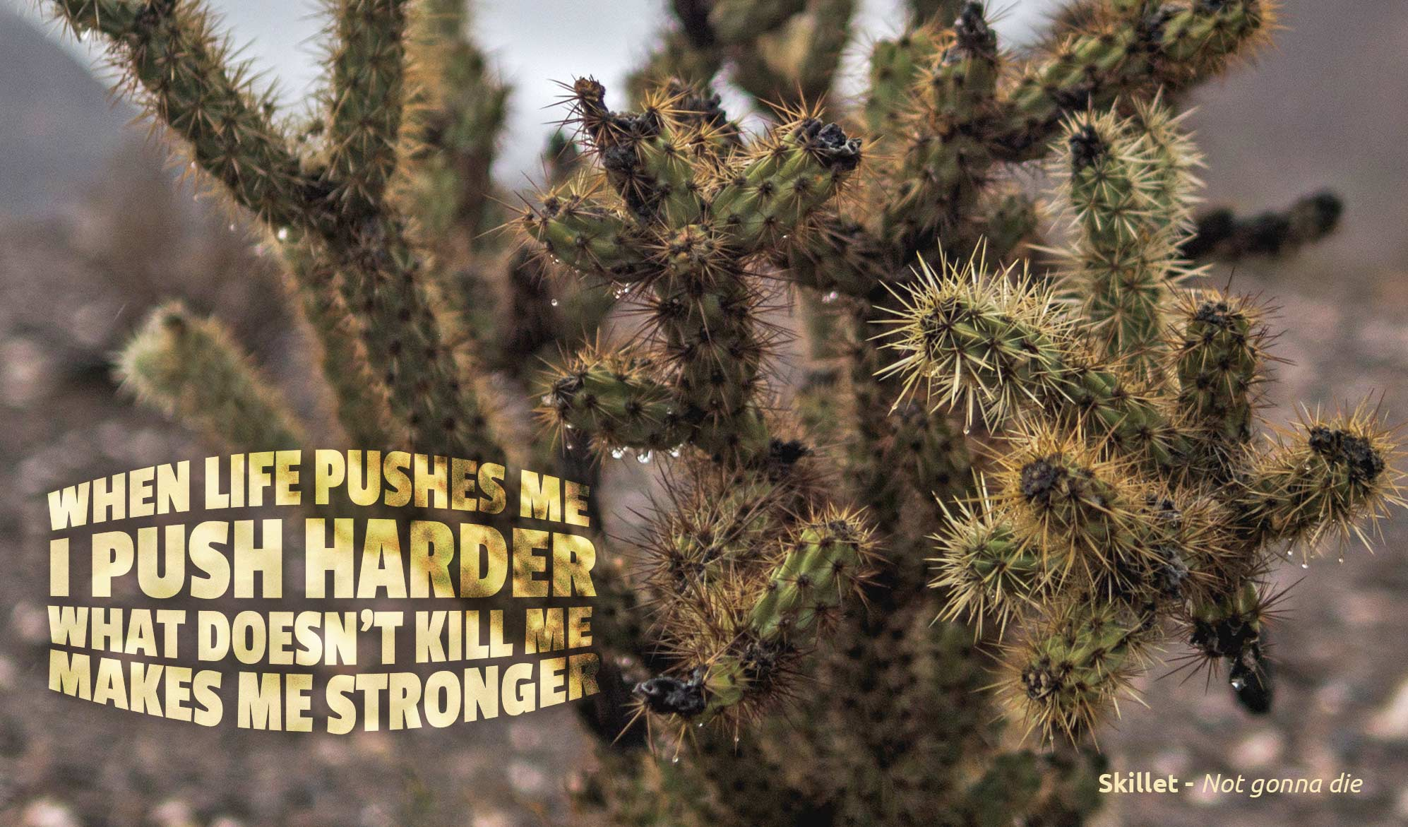 daily inspirational quote image: a Joshua tree close up
