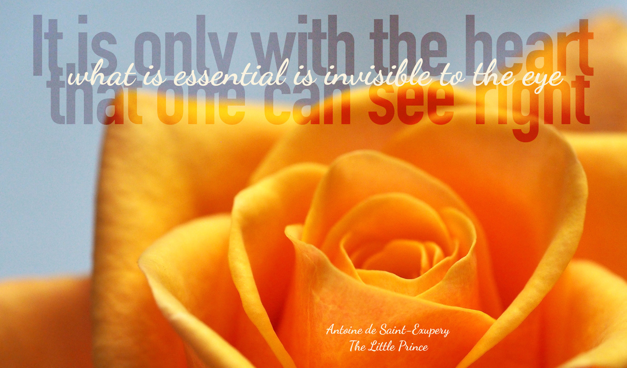 daily inpirational quote image: close up of an orange rose in full bloom