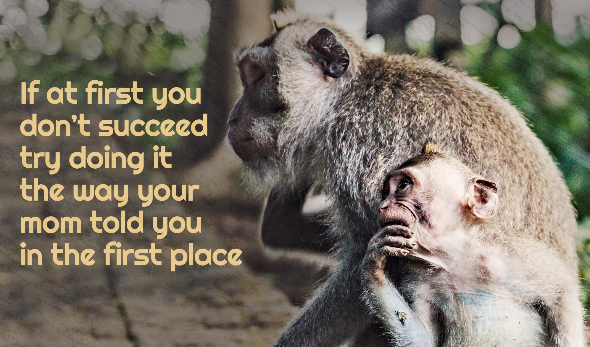 daily inspirational quote image: a mom and a baby monkey on the forest