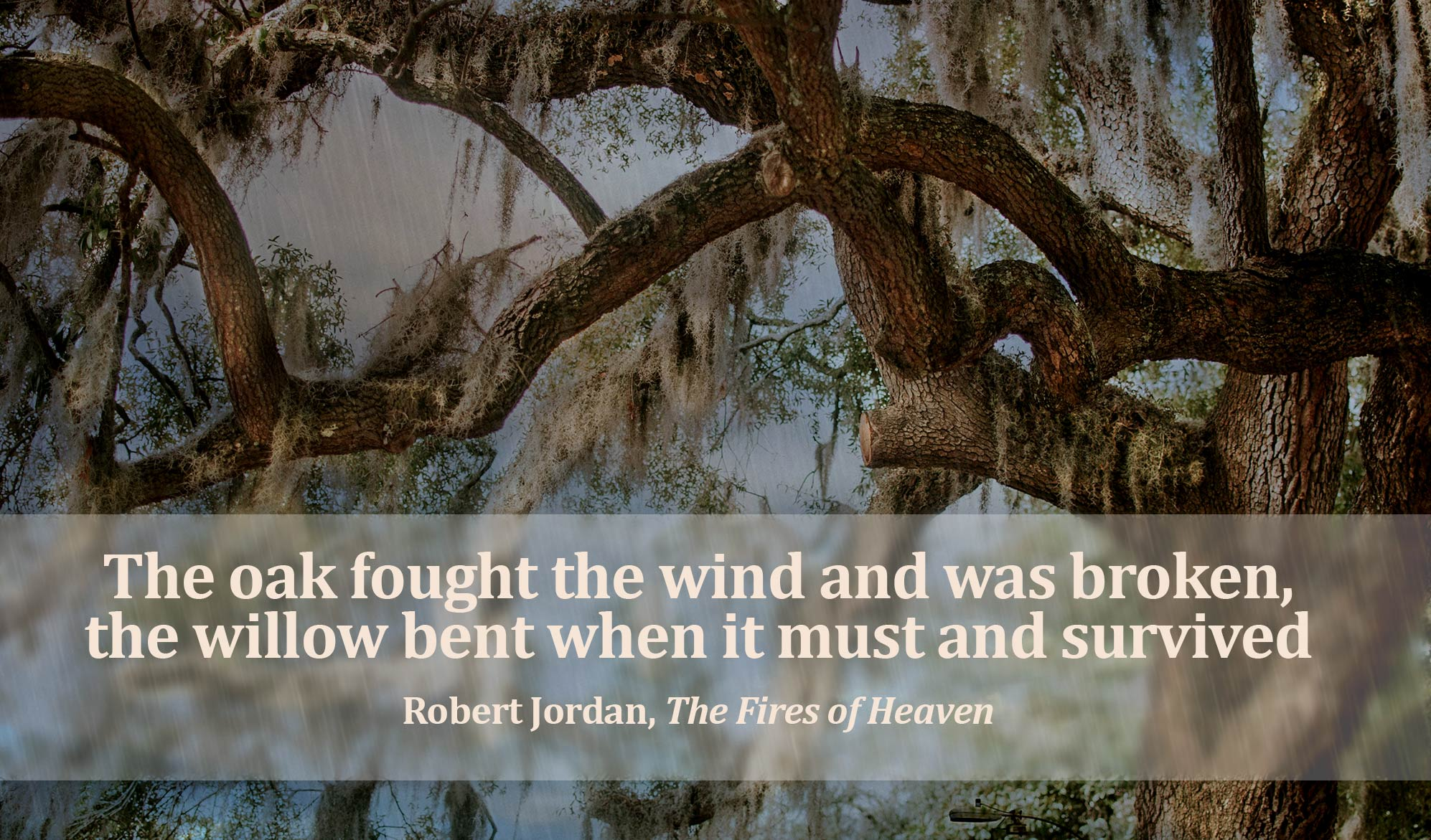 daily inspirational quote image: crooked and twisted willow branches