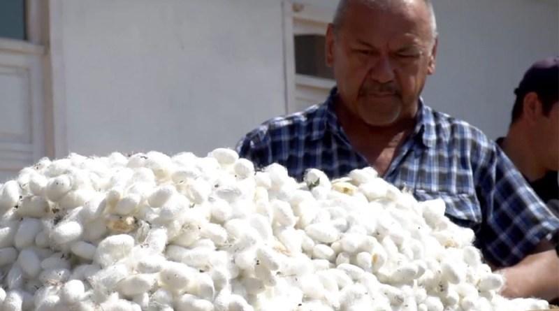 Ӯзбекистон: фишорорӣ нисбати фермерон идома дорад