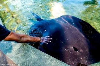 Long Beach Aquarium (6)