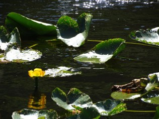 lagoon 2