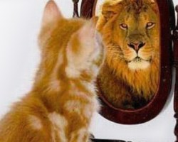 Cat sees a lion in the mirror.