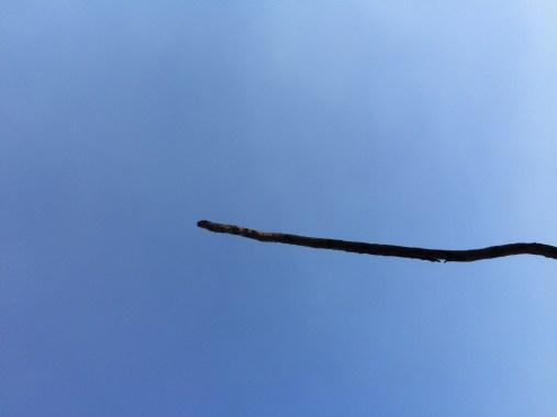twig used as tootbrush