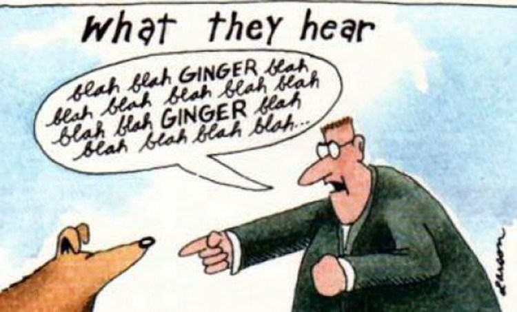 What We Say To Dogs - What They Hear