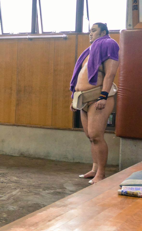 sumo in japan