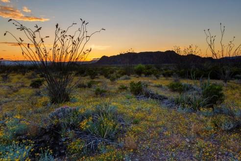 Flowering Desert Floor