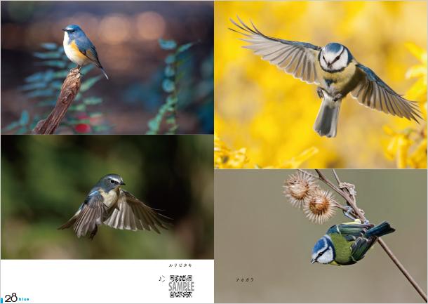 鳴き聲が聴ける 世界の美しい鳥図鑑│寶島社の公式WEBサイト 寶島チャンネル