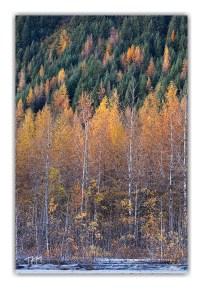 Herbert River Trees