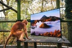 Detailných a realistické zábery priblížili prirodzené prostredie vo voľnej prírode.