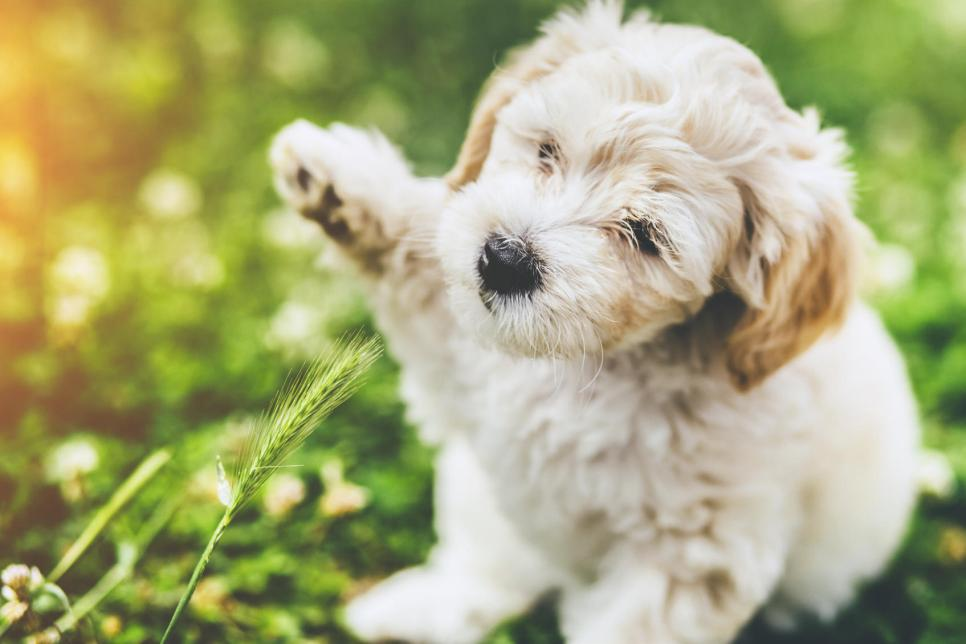 Adorable Pictures Of Puppies And Puppies With Babies Editors Faves Tlc Com