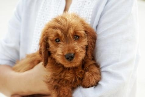 Is Owning A Dog Right For You The Pros And Cons Of Dog Ownership Parenting Tlc Com