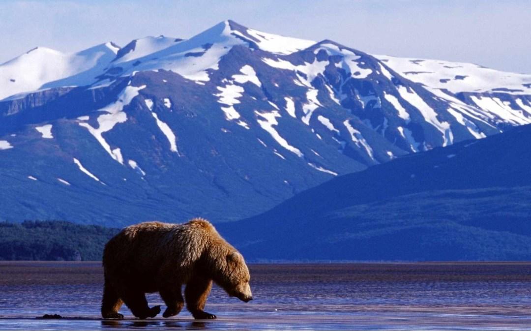 Alaska Mission Team Update