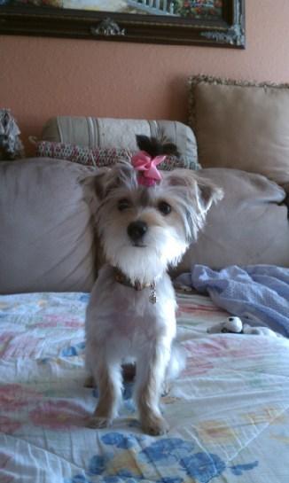 DaisyMorkie