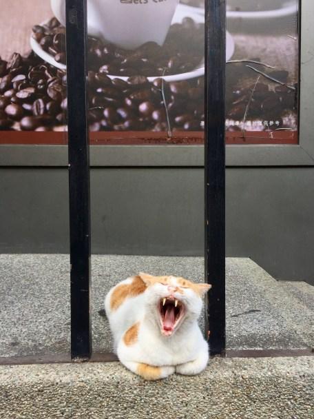 Yawning outside the Family Mart.