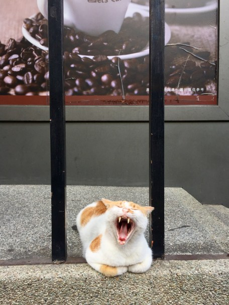 Yawning outside the Family Mart.