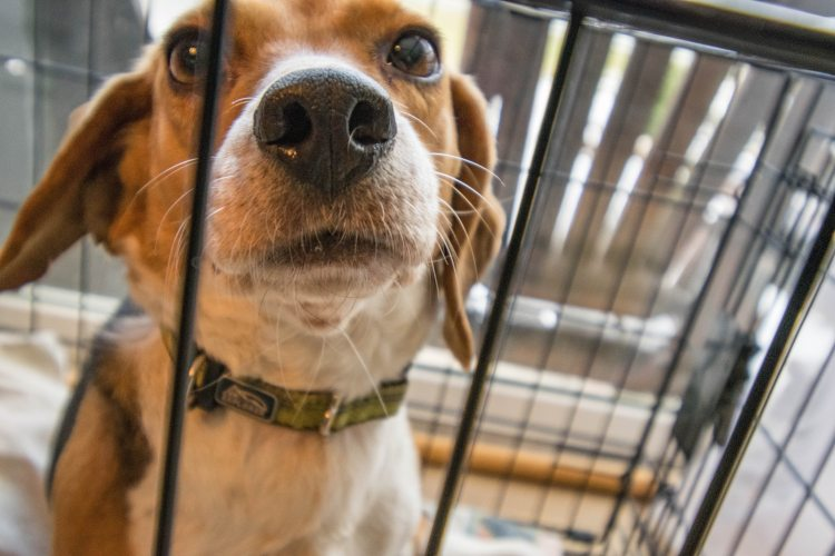 Is Crate Training Good for Your Dog?