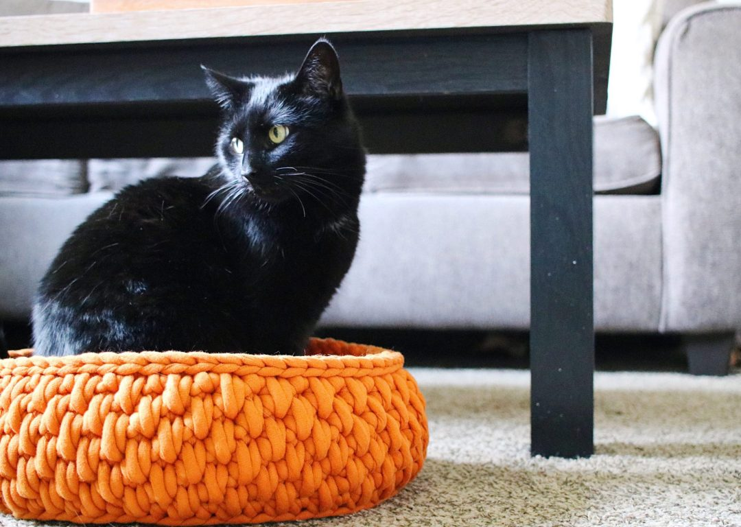 Astonishing Tl Yarn Crafts The Big Little Pet Bed A Round Cat Bed Short Links Chair Design For Home Short Linksinfo