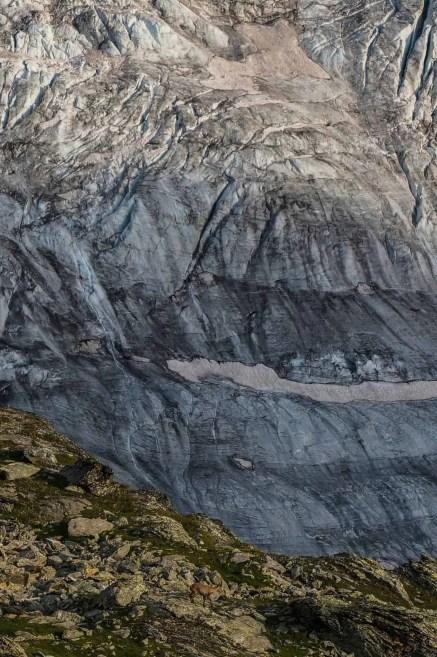 Ibex just below Cabane de Moiry.