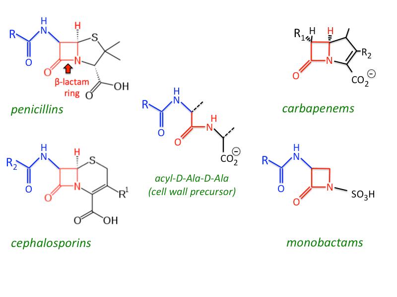 Image result for beta lactam ring