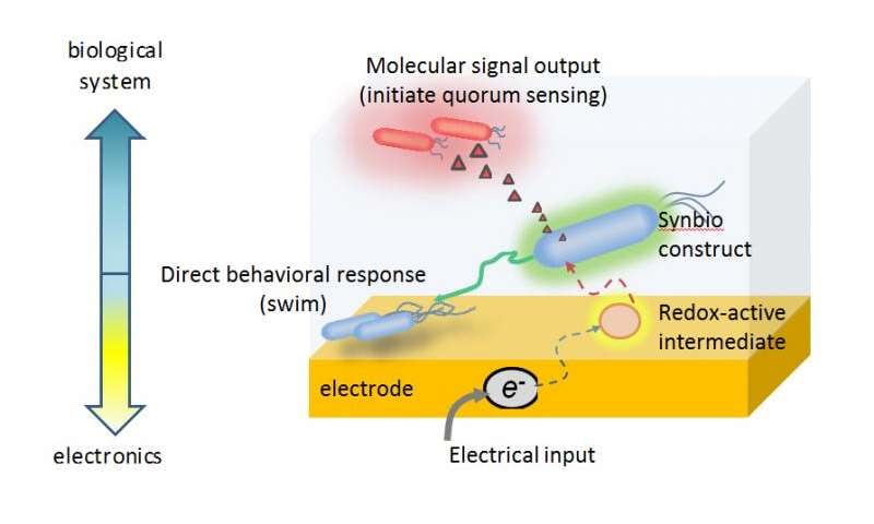 Біоелектричні живі клітини - перший крок на шляху до створення повноцінних кіборгів