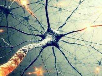 Гігантський нейрон міг би пояснити, звідки приходить свідомість