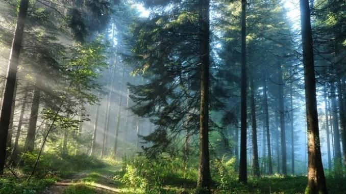 ліси борються з глобальним потеплінням