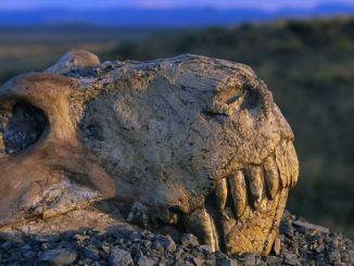 Шосте масове вимирання на Землі може початися 2100 року