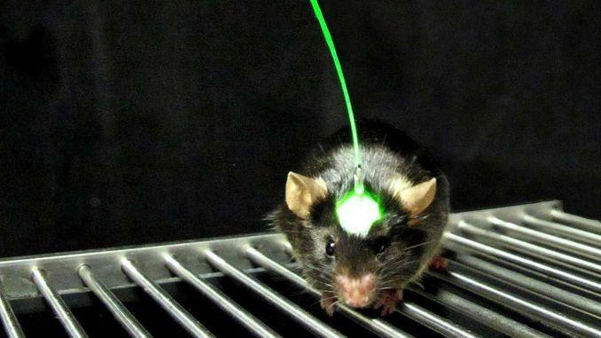 Корейські вчені створили дистанційно керованих мишей