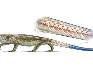 Рептилії навчилися відкидати хвіст