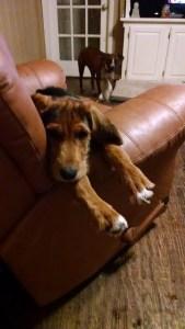 Rhett loves the couch