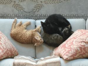 3 happy kittens