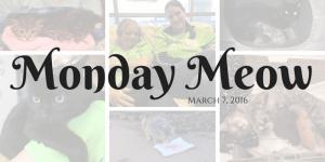 Monday Meow 3/7/16