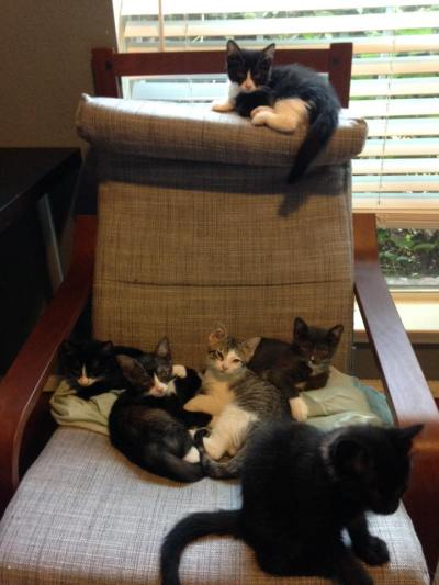 Kittens On Chair