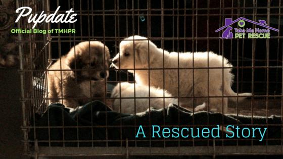 Rescue Story Blog Photo (1)