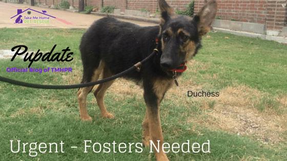 Fosters Needed- Duchess Stuff Blog Photo