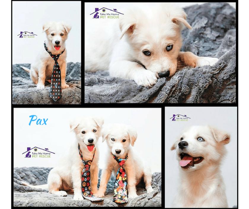 Pax Collage