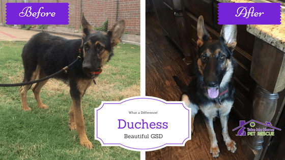 Duchess Featured Pup