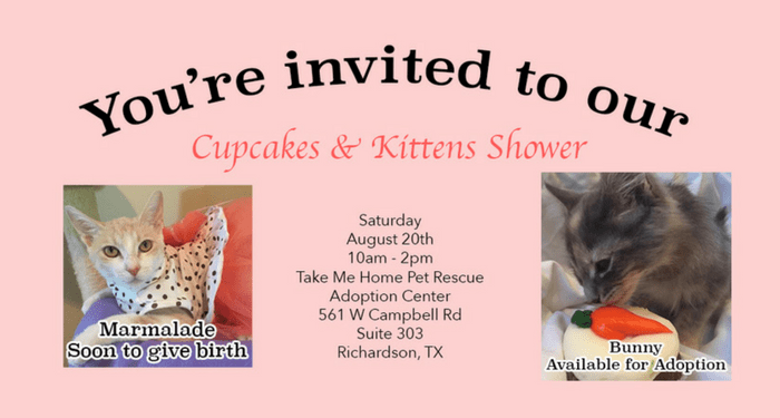 Kitten-Shower-Blog-Header