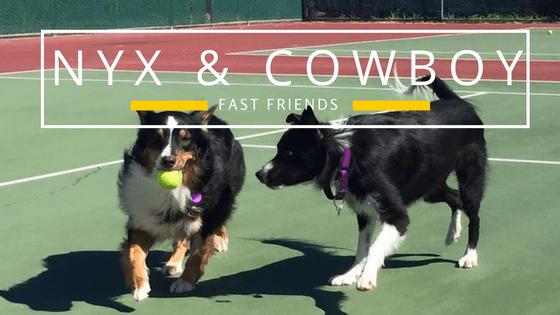 Nyx & Cowboy (1)