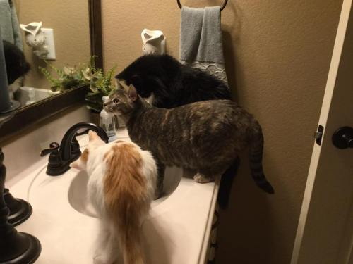 Trio-sink