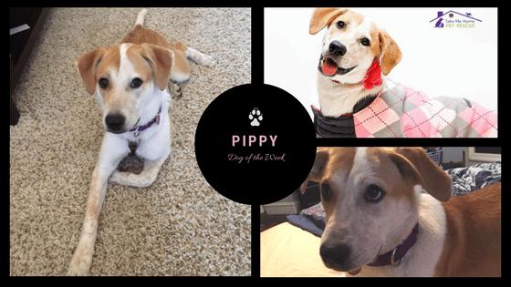 Pippy DOTW (2)