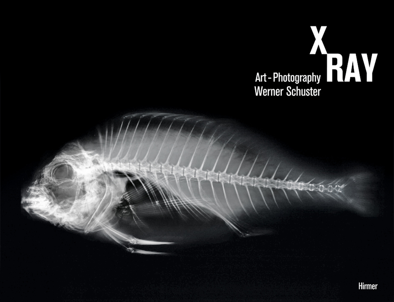 X Ray Art Photography Schuster Harather