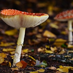 Mushrooms May Be Key to Preventing Memory Loss, Say Scientists