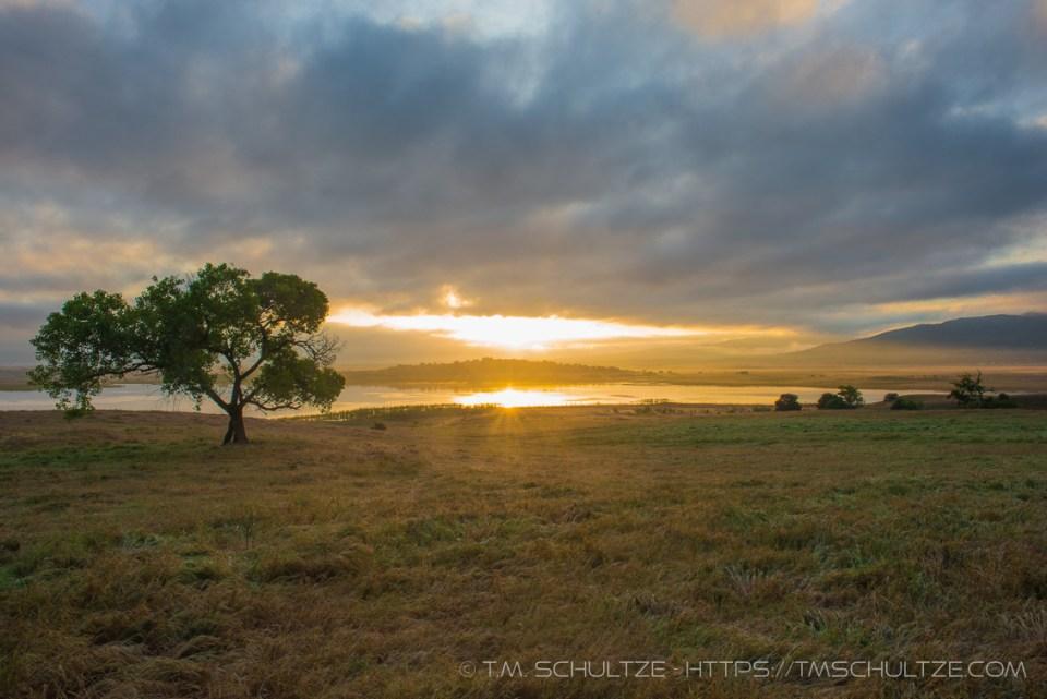 Cottonwood Sunrise by T.M. Schultze