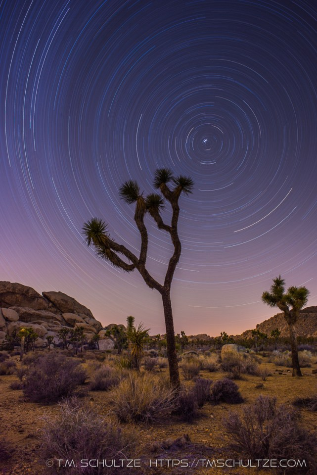 A Joshua Tree and Star Trails, by T.M. Schultze