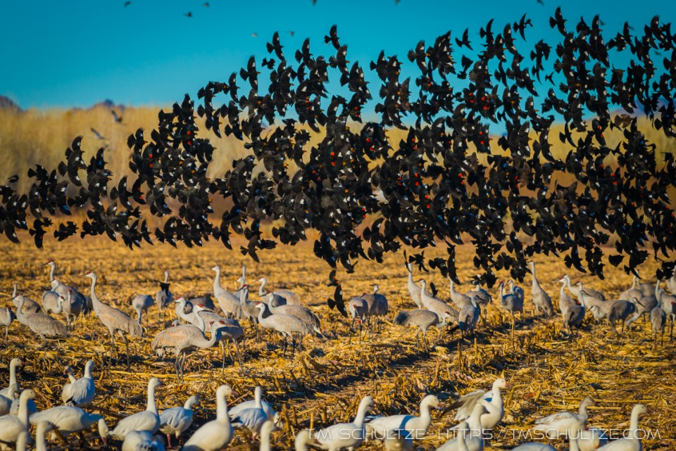 Bird Brawl by T.M. Schultze